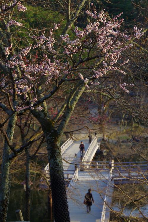 奈良公園 浮見堂 梅