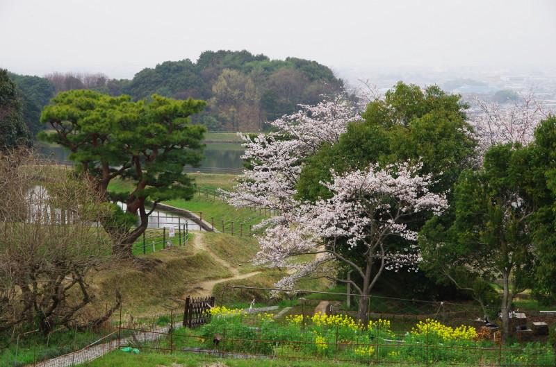 やまのべ 崇仁天皇陵 桜2
