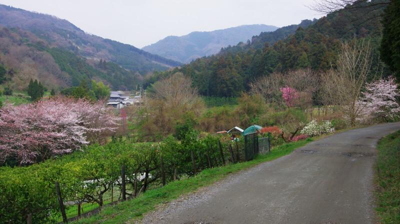 やまのべ 桧原神社近く