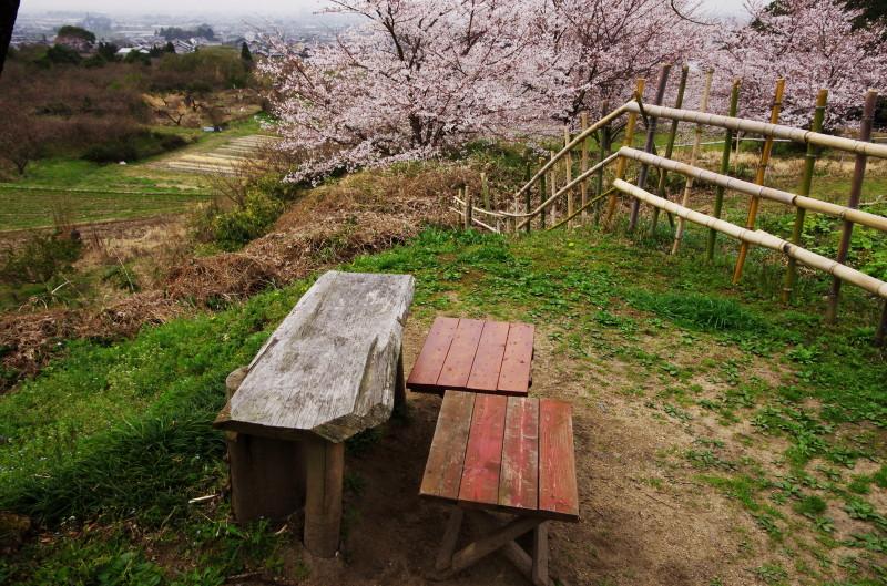 やまのべ 展望台ベンチと桜