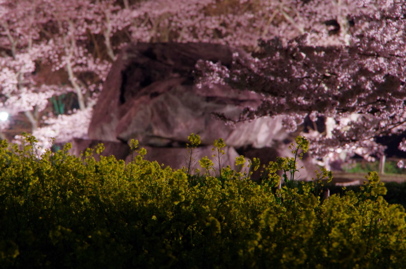 石舞台 菜の花