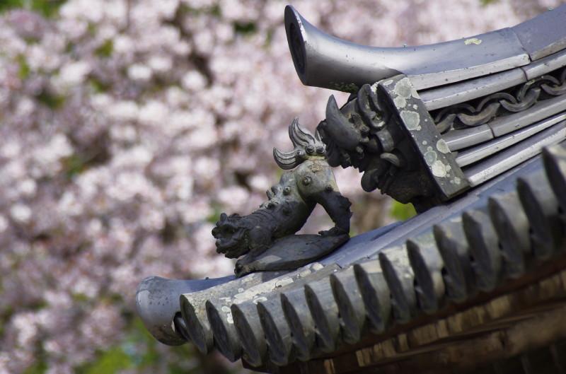 法隆寺 鬼瓦と桜
