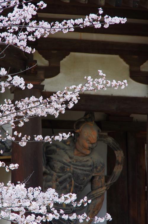 法隆寺 仁王様と桜