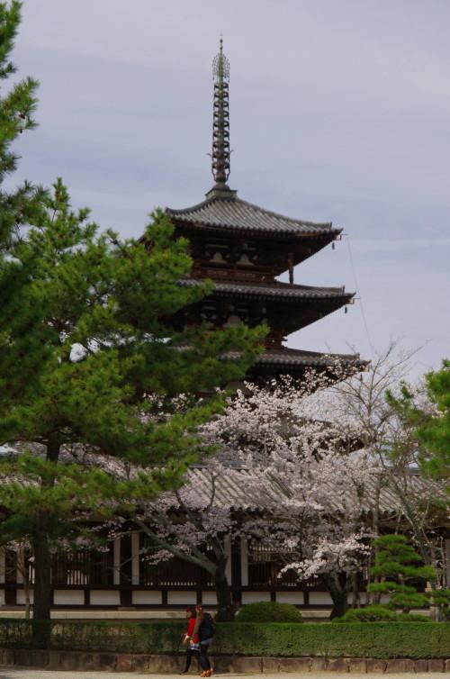 法隆寺 塔と桜