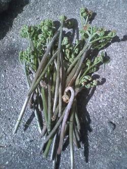 4-10収穫