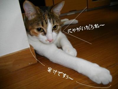 すりすり娘01
