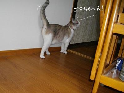すりすり娘03