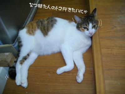 仲良応援03