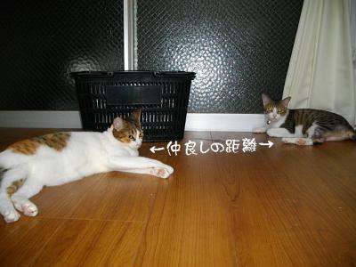 仲良応援04