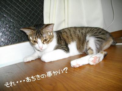 仲良応援06
