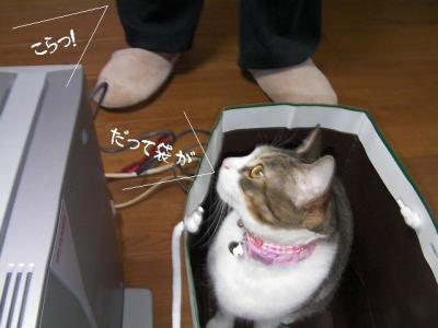 猫の洗顔02