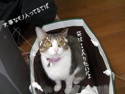 猫の洗顔03