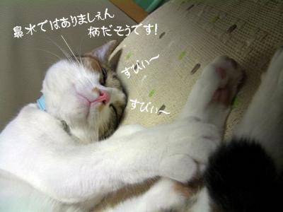 猫の洗顔05