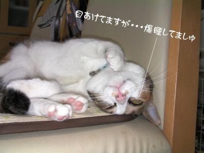 猫の洗顔06