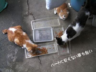 猫ぐっず05