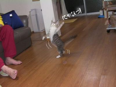 子猫は楽し01