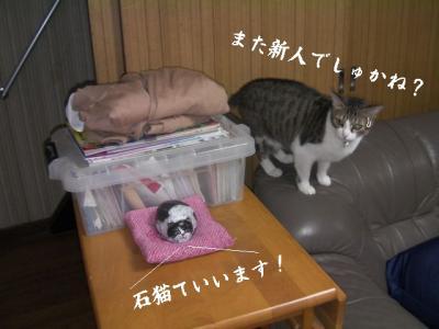 猫達へお願い02