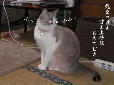 猫達へお願い05