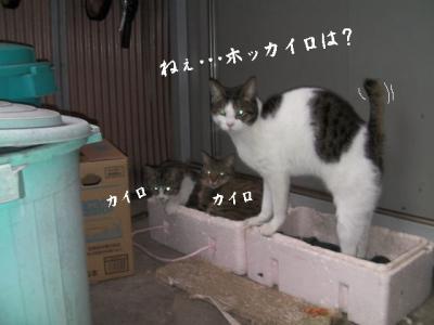 猫とX'mas01