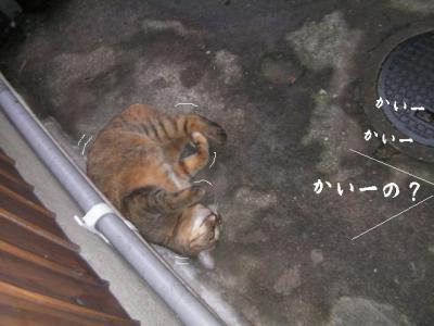 猫とX'mas02