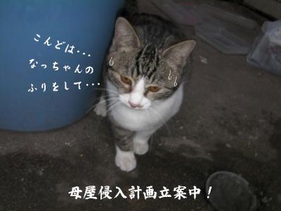 猫とX'mas03
