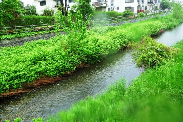 7_K_River in rain