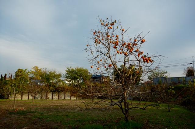 20121129_11.jpg