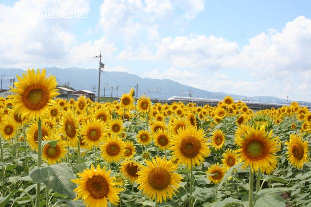 IMG_9970新幹線4