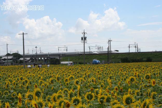 IMG_9992新幹線7