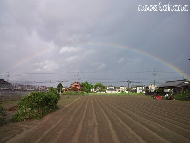 KIMG0148虹