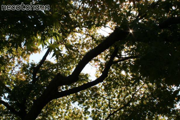 IMG_0590紅葉2
