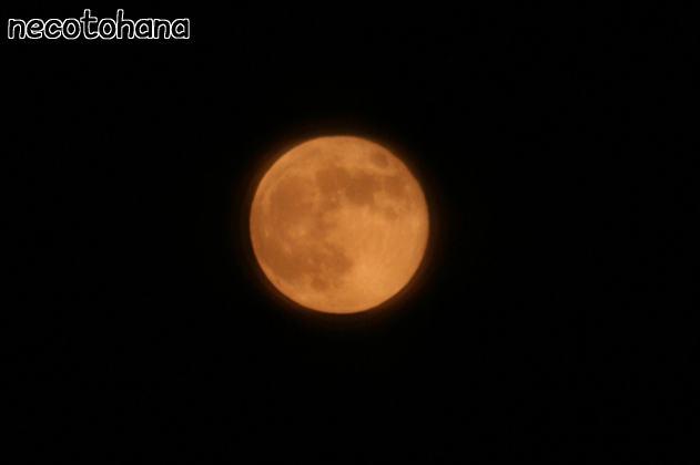 IMG_0763満月