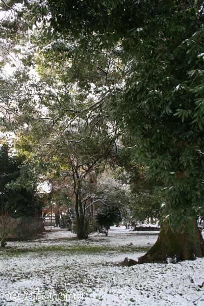 IMG_0922雪2