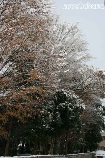IMG_0934雪4