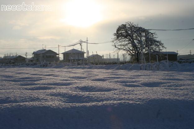 IMG_0917雪1