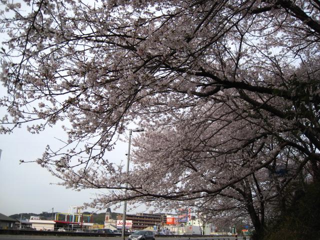 足高公園下駐車場 20130401