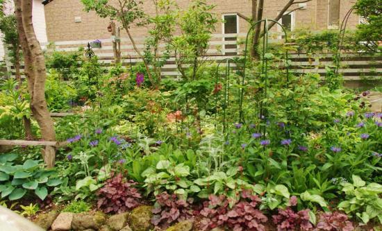 6月のお庭