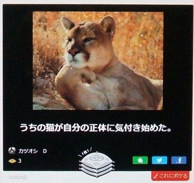 DSCF6237.jpg