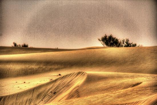 タクラマカン砂漠の辺縁