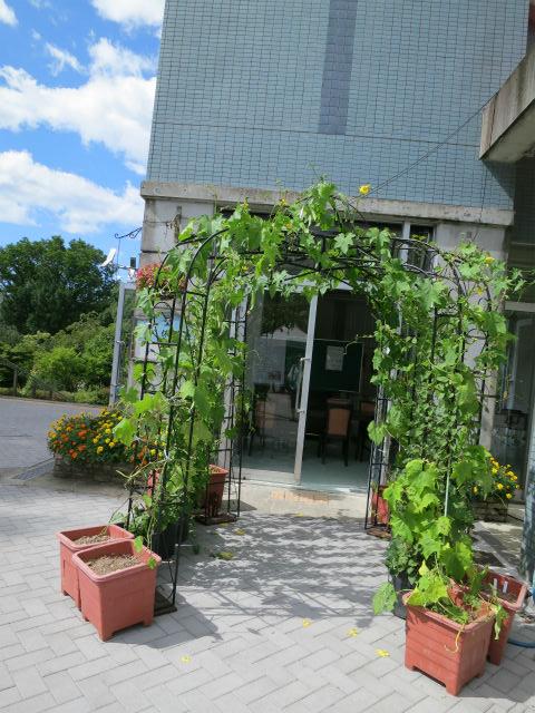 展示中ン緑のドーム