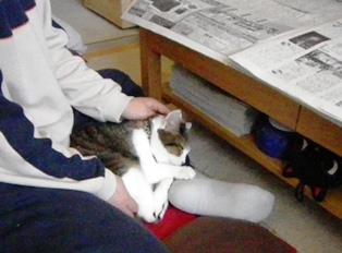 新聞と甘えん坊のキジ白猫