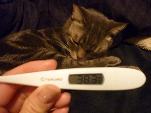 最後は、グッスリ眠る母猫