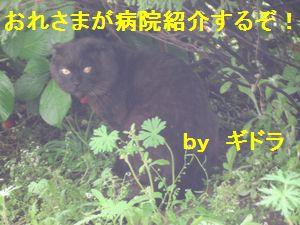 IMG_83081.jpg