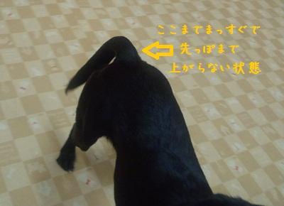 2012 5  シッポ 2
