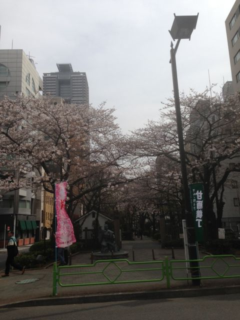 甘酒横丁桜