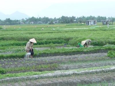 ベトナムの農村風景