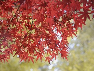秋の紅葉win6307-1