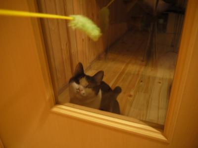 ドアの内側からてんてんと遊ぶ