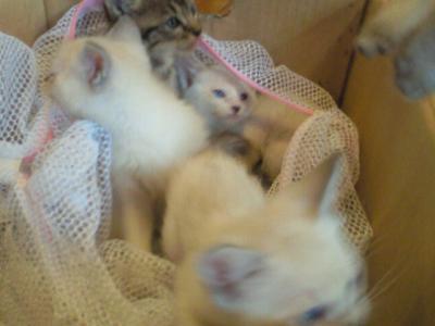 保護猫4匹