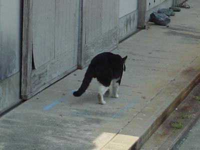 三本足のネコ